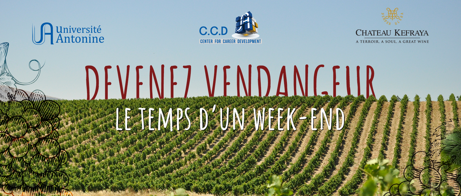Experience a grape harvest with C.C.D